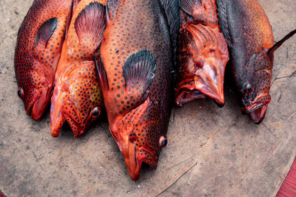Red Fishes On Island Of Fogo In Cape Verde